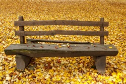 wooden bench in the park on fallen leaves background