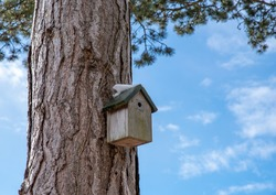 Wooden bird box with snow on roof on a large tree trunk with blue sky.