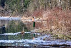 Wooden bird house along lake in bird sanctuary