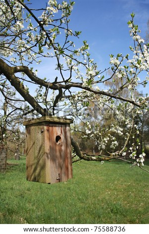 Wooden bird house hanging on blooming apple tree