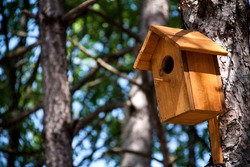 wooden birdhouse on a tree in the forest and park