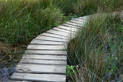 Wooden board walk in bog with water plants in modern garden concept