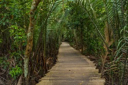 Wooden boardwalk in natural untouched mangrove forest in pulau Ubin, Singapore whole island like a park place worth a visit