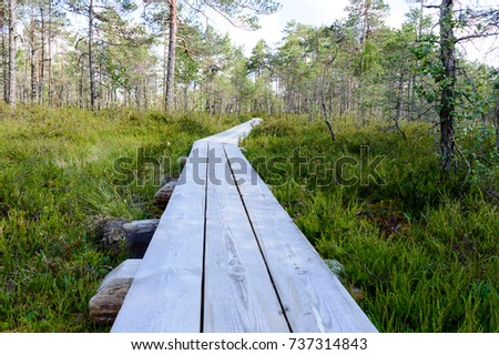 wooden boardwalk in swamp tourist trail with trees and sun rays