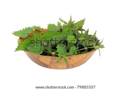 Wooden bowl of fresh picked wild stinging nettles ready to cook isolated on white