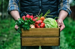 Wooden box with fresh farm vegetables in man's hands outdoors.