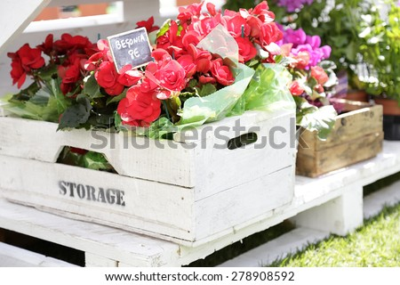Wooden boxes with flowers of different colors on a street flower market