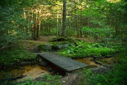 Wooden bridge across stream on Tanbark Trail, Allegheny National Forest, Pennsylvania.