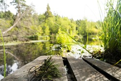 wooden bridge at the pond in the deep forest