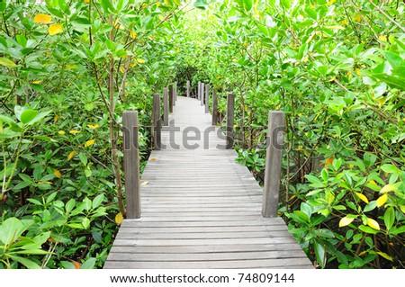 Wooden bridge go to mangrove forest