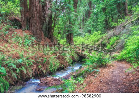 Wooden bridge in a forest - stock photo