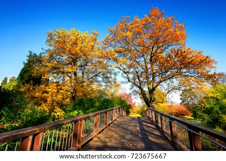 Wooden bridge in an idyllic autumn scene on a sunny day, with deep blue sky and colorful trees