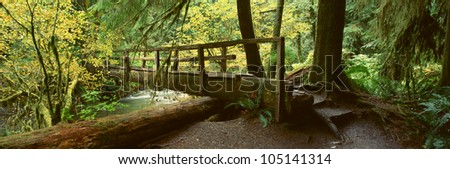 Wooden Bridge In The Hoh Rainforest, Olympic National Park, Washington