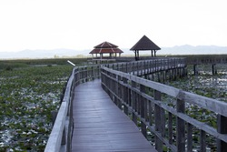 Wooden bridge in the lotus lake with blur foreground and background