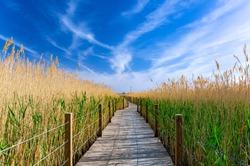 wooden bridge in the reeds