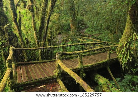 Wooden bridge in tropical rain forest, taken at Doi Inthanon National Park, Chiang Mai - Thailand.