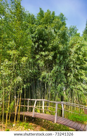Wooden bridge leading to a bamboo forest