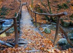 Wooden bridge over brook in autumn forest