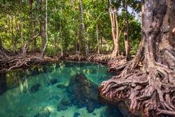 Wooden bridge to the jungle, Tha Pom Khlong Song Nam, mangrove forest, Krabi,Thailand,Karntiphat Changrua