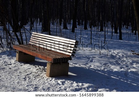 Wooden brown bench in a winter Moscow park on sunny bright day with snow, trees and nobody around