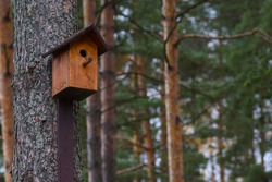 Wooden brown birdhouse on a trunk of a tree in the park. A house for the birds. Bird feeder. Copy space