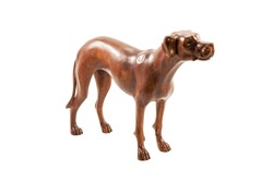 Wooden brown purebred dog isolated on a white background