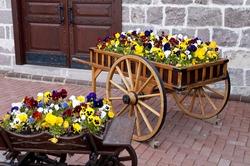 Wooden cart inside the flowers in capital ankara turkey