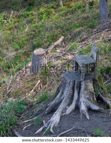 Wooden chair is sawed right in the trunk of a growing tree or what you can do with a tree stump. #1433449625