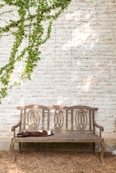 Wooden chair over brick wall and green vine, cat sleeping and relaxing
