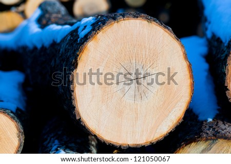 Wooden circle with a split cut of the log