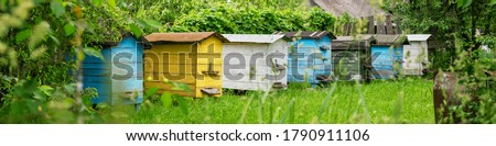 Photo of  wooden coloured hives of honeybees located on green meadow against trees and village building roof on summer day