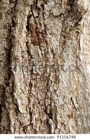 Wooden cork. Tree bark texture. - stock photo
