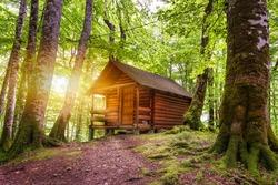 Wooden cottage in the forest near Biogradsko lake in Montenegro