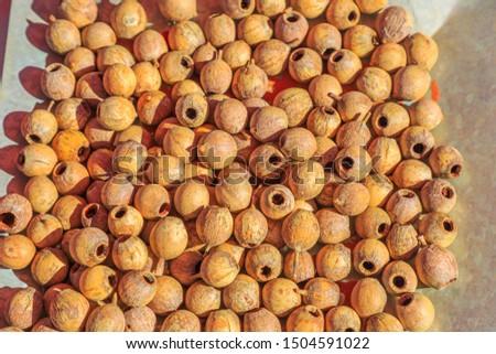 Wooden craft beads of Sandalwood Seed. Australia Bush food eaten by Australian aborigines. Australian outback. Northern Territory, Australia. #1504591022