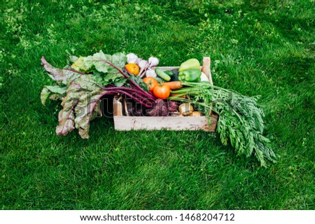 Wooden crate full of vegetables from the organic garden on a green background. Harvesting homegrown products.