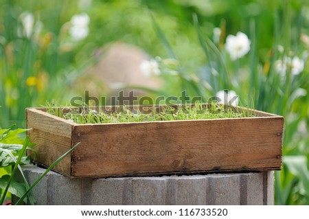 Wooden Crate with Seedlings in the Garden