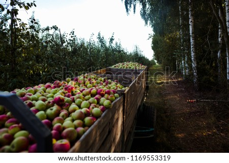 Wooden crates full of apples #1169553319