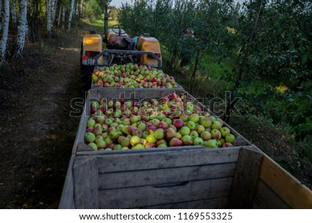 Wooden crates full of apples #1169553325
