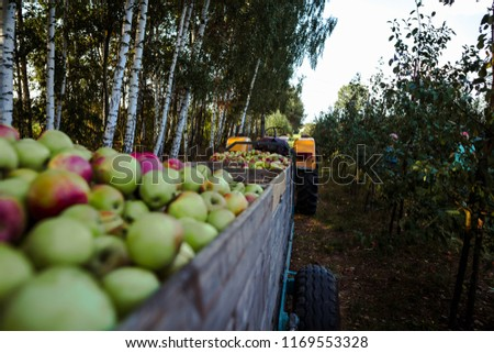 Wooden crates full of apples #1169553328