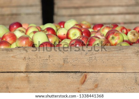 Wooden crates full of apples #1338441368