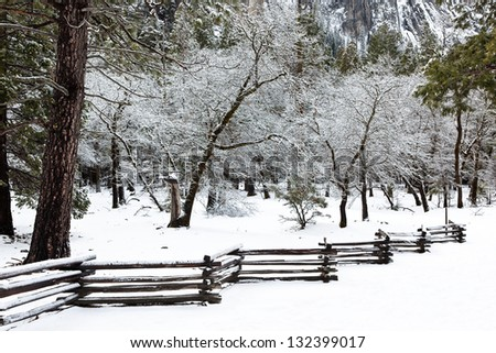 Wooden fence and trees after winter storm, Yosemite National Park, California