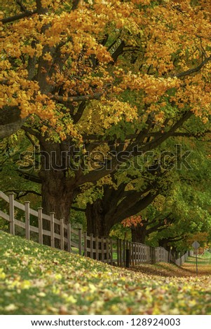 Wooden fence and trrees with colorful autumn leaves.