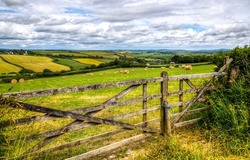 Wooden fence in agricultural land. Farm field fence. Fence in farm field