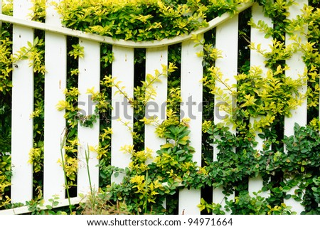 Wooden fence in garden with plant