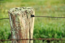 wooden fence post with lichen, rusty wires, raindrops and grassy background