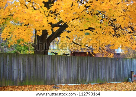 Wooden fence with fall colored leaves in the background, Ontario, Canada