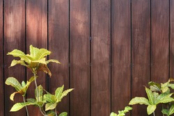 Wooden fence with plants as background