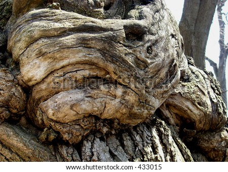 Wooden Fist. The structure of the tree is looking like a fist, built by the structure of the tree in some point of the time during the tree growing up.