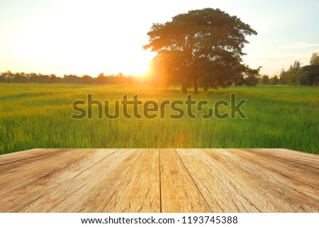 wooden floor beside green rice field at agriculture farm in the morning sunrise. #1193745388