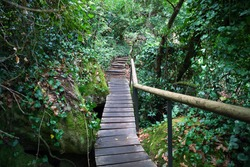 Wooden footbridge and log steps among mossy granite outcrop in hillside forest. Hiking trail on slope of Sintra Mountains, Lisbon Region, Portugal, Southwestern Europe.